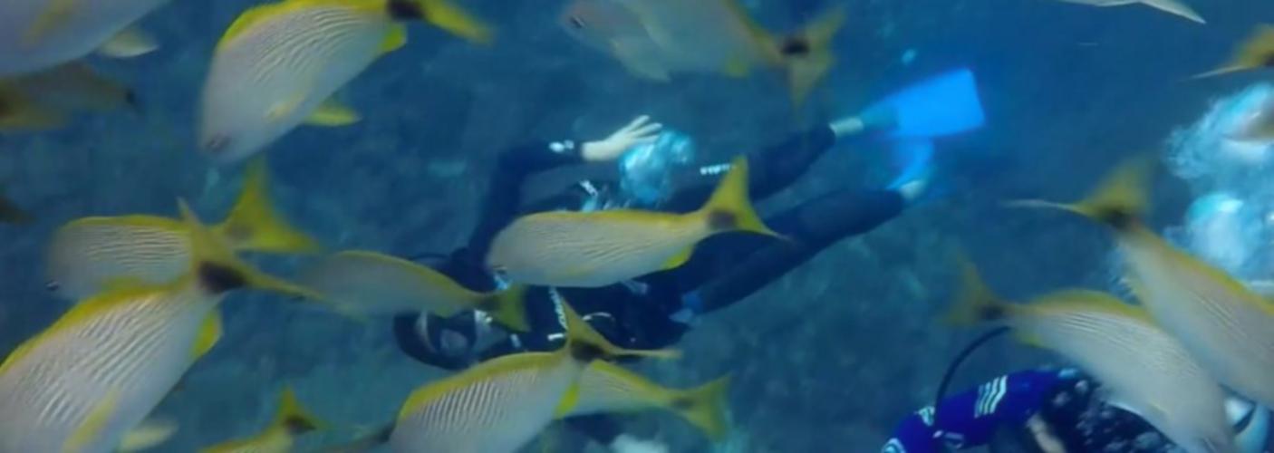 Scuba Diving Catalinas - Tamarindo, Costa Rica - Native's Way Costa Rica Tamarindo Tours and Transfers